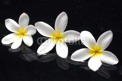 Spa still life with element frangipani