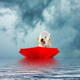 Dog Sailing in Up-side-Down Umbrella