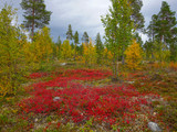 autumn colors in the finnish taiga