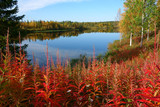 fall colors, lapland