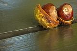Two chestnuts with shell on a park bench in autumn.Horizontal.