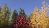 Autumn paints the southern Urals