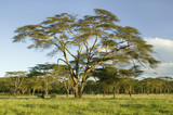 Landscape of Lewa Wildlife Conservancy in green grass of North Kenya, Africa