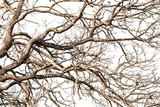 Tree twigs with bare trunks and branches..