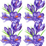 Watercolor violet purple crocus flower seamless pattern background
