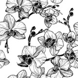 black and white seamless pattern with orchid flowers