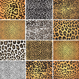 Animal skin fur vector pack leopard zebra
