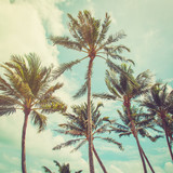 coconut palm tree and blue sky clouds with vintage tone.