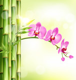 Orchid pink flowers with bamboo and sunlight on light-green back