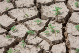 Dry, cracked dirt in a drought area.