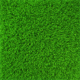 Green lawn grass background texture close-up. 3d render