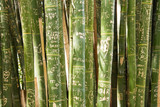 Bamboo forest. Zen tropical ambiance