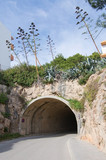 Tunnel with vegetation