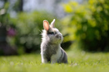 Cute Fluffy Rabbit Outdoors on Green Grass