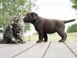 cat and puppy friendship- meeting meet