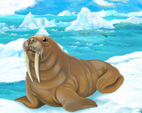 Cartoon scene - arctic animals - walrus