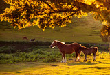 Horse and foal in field at sunset