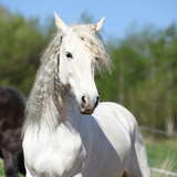 Andalusian mare with long hair in spring