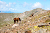 Horses in the Pyrenees mountains, Spain