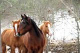 Horses Gudar mountains scenery Teruel Aragon Spain
