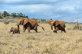 Elephants of Tsavo