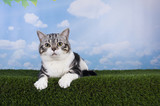 cat playing on grass serene day