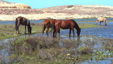 Horses on a pasture by the river