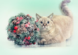 Cat with Cristmas decoration Kissing Bough