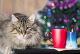 Fluffy pet cat in a Christmas interior