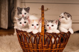 Five cute kittens in braided basket