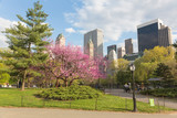 Flowering trees in Central Park, NYC