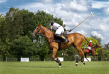 Horse in action at a polo game