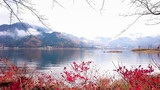 lake view red bush autumn kawaguchiko
