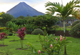 Arenal Volcano and Palm Tree