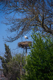 Storks in the nest. On the electrical pole.