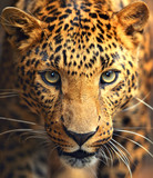 Leopard portret
