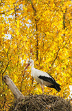 a stork in an autumnal tree