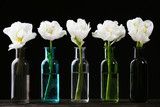 Fresh tulips in glass vases on black background