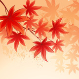 Autumn leaves  background of  sky. Vector illustration