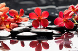 Beautiful red orchid with therapy stones