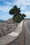 Mountain road, rocks and green forest landscape on a sunny summer day in Mallorca, Balearic islands, Spain.