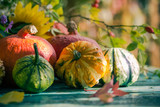 Autumn harvest garden pumpkin fruits colorful flowers plants