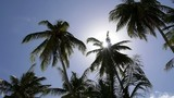 Coconut Palm Trees against Blue Sky and Sun. Slow Motion.