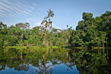 Beautiful landscape of nature reflected in amazon rainforest