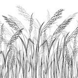 Vector grass sketch, vector illustration with wild herbs