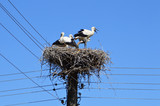 Storks family in their nest high on electrical post