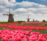 dutch windmills in spring  day
