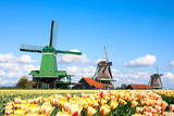 windmills tulips Holland
