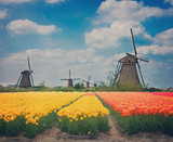 dutch windmills over  tulips