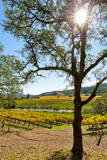 California wine country vineyard landscape with sun flare
